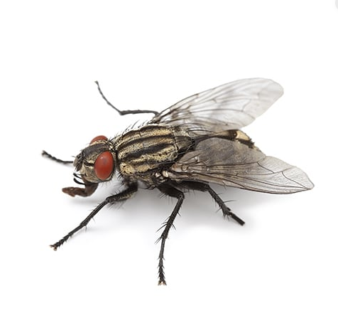How to effectively perform houseflies control process